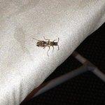 roach on ironing board