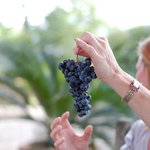 Tuscan Wine Tours by Grape Tours