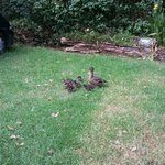 duck family around the park :)