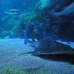 Nurse Shark in Sea Life