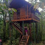Sloth Tree House