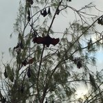 Fruit bats on one of our hikes