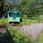 The swamp shack