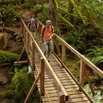 Enjoy easy to challenging hikes in old growth forests.
