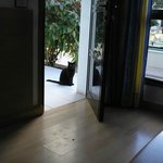 This is a cat that i'm told often vists the Hotel, so of course i fed it.