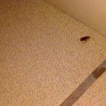 bathroom bug