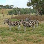 Open Range Zoo