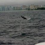 Infant whale breach on Navatek I