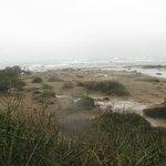hundreds of elephant seals