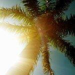 my favorite palm tree- day