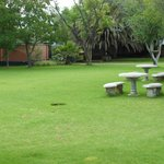 Benches on grass under the trees
