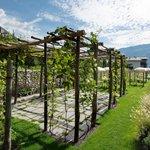 Weinlaube im Feng Shui Garten