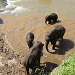 Слоники в ручье