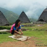 Wae rebo woman drying coffee beans freshly picked.