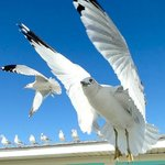 I enjoy feeding the sea gulls