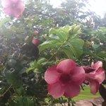 Flowers from garden