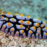 Nudibranch  - photo by yellowshirts