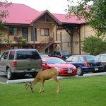 Deer exterior