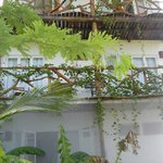 vine covered balconies