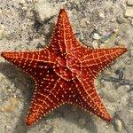 Starfish found while Kayaking