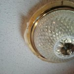 Bug filled light fixture