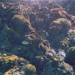 pretty coral spot, sergeant majors et al