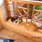 unsere katzen die uns tgl besuchten