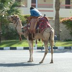 Camel Ride Anyone...!