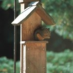 Squirrel at the feeder on the deck