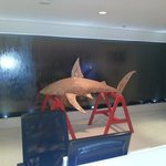 the shark in the frount desk