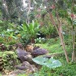 Pico foliage