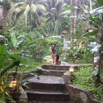 Ace the jungle dog