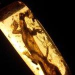 Preserved in amber forever
