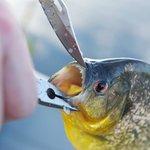 Pantanal Wetlands - Mean fish