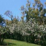 Wunderschöne Bäume und Pflanzen
