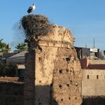 Stork at the Kasbah