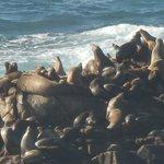 Seals sunning on the rocks