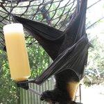 Ray the blind bat