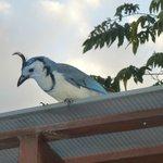 Kleiner Freund saß oft auf dem Dach im Poolbereich