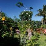 Der tropische Garten mit vielen Blumen.
