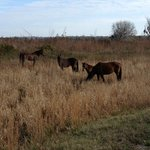 Group of wild horses encountered on trails
