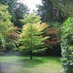 pretty tree at Tatton