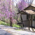 Cabin 18 in Spring