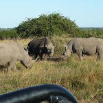 White & Black Rhino Josling over territory! A rare sighting.