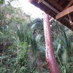 jungle from my palapa looking towards the water fall on site