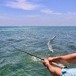 Fishing for tarpon on the beautiful florida keys flats.