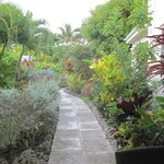 Tropical Gardens from our patio