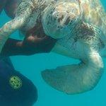 Catamaran trip to swim with turtles. Amazing experience!
