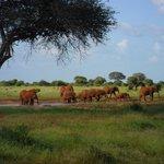 gruppo elefanti