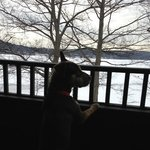 Our dog Juno checking out the lake 1st thing in the morning